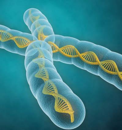 adn gen